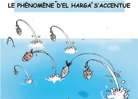 Le phénomène d'el harga s'accentue - Dessins et Caricatures, Jony-Mar - La voix de l'Oranie - Gagdz.com