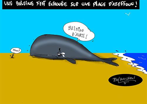Une baleine s'est échouée sur une plage d'Azeffoune - Belkacem - Le Courrier d'Algérie - Gagdz.com