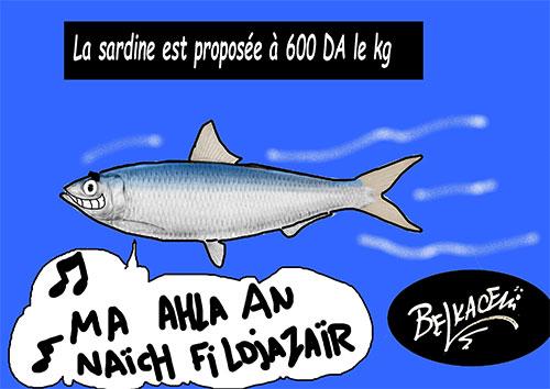 La sardine est proposée à 600 da le kg - Belkacem - Le Courrier d'Algérie - Gagdz.com