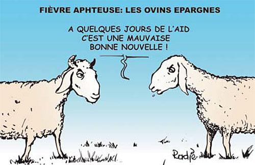 Fièvre aphteuse: Les ovins épargnés - Ghir Hak - Les Débats - Gagdz.com