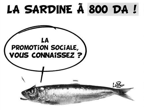 La sardine à 800 da - Vitamine - Le Soir d'Algérie - Gagdz.com