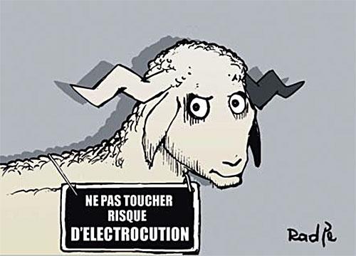 Mouton - Ghir Hak - Les Débats - Gagdz.com