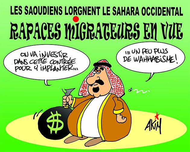 Les Saoudiens lorgnent le Sahara Occidental: Rapaces migrateurs en vue