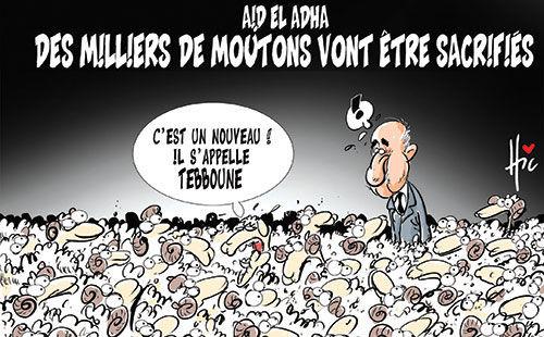 Aïd el adha: Des miliers de moutons vont être sacrifiés