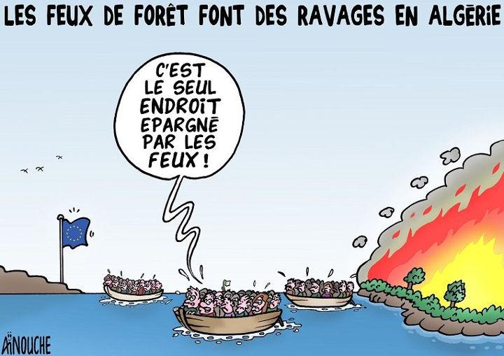Les feux de forêt font des ravages en Algérie