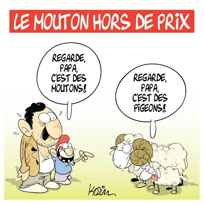 Le mouton hors de prix