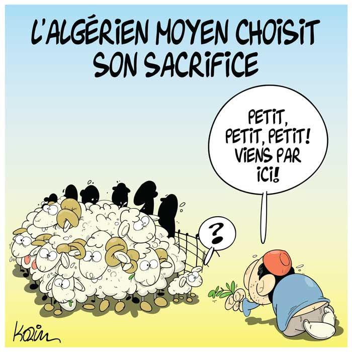L'algérien moyen choisit son sacrifice